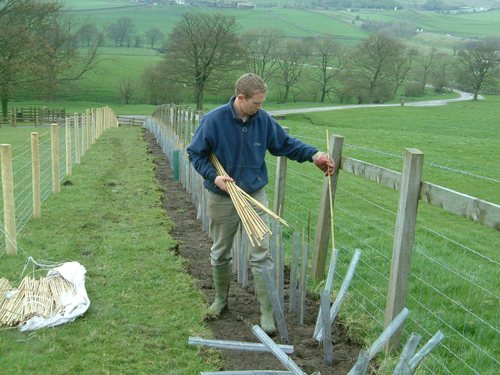 Paul Havron planting New Hedgerow