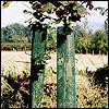 Balance mesh tree guard