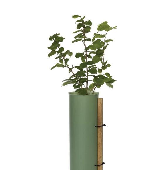 Tubex shrubshelter plus
