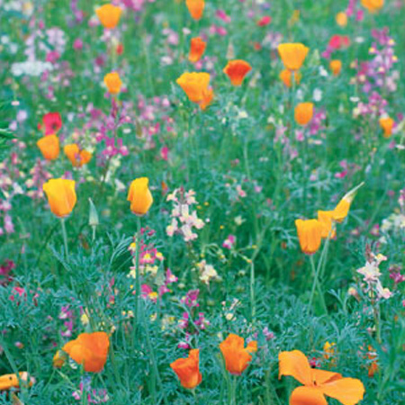 Wildflower Seeds and Woodland Bulbs